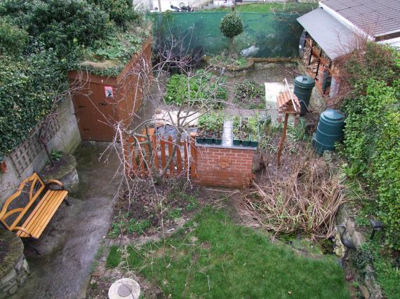 Trevor's garden. Photo taken 2 February 2009 by C.Finn.