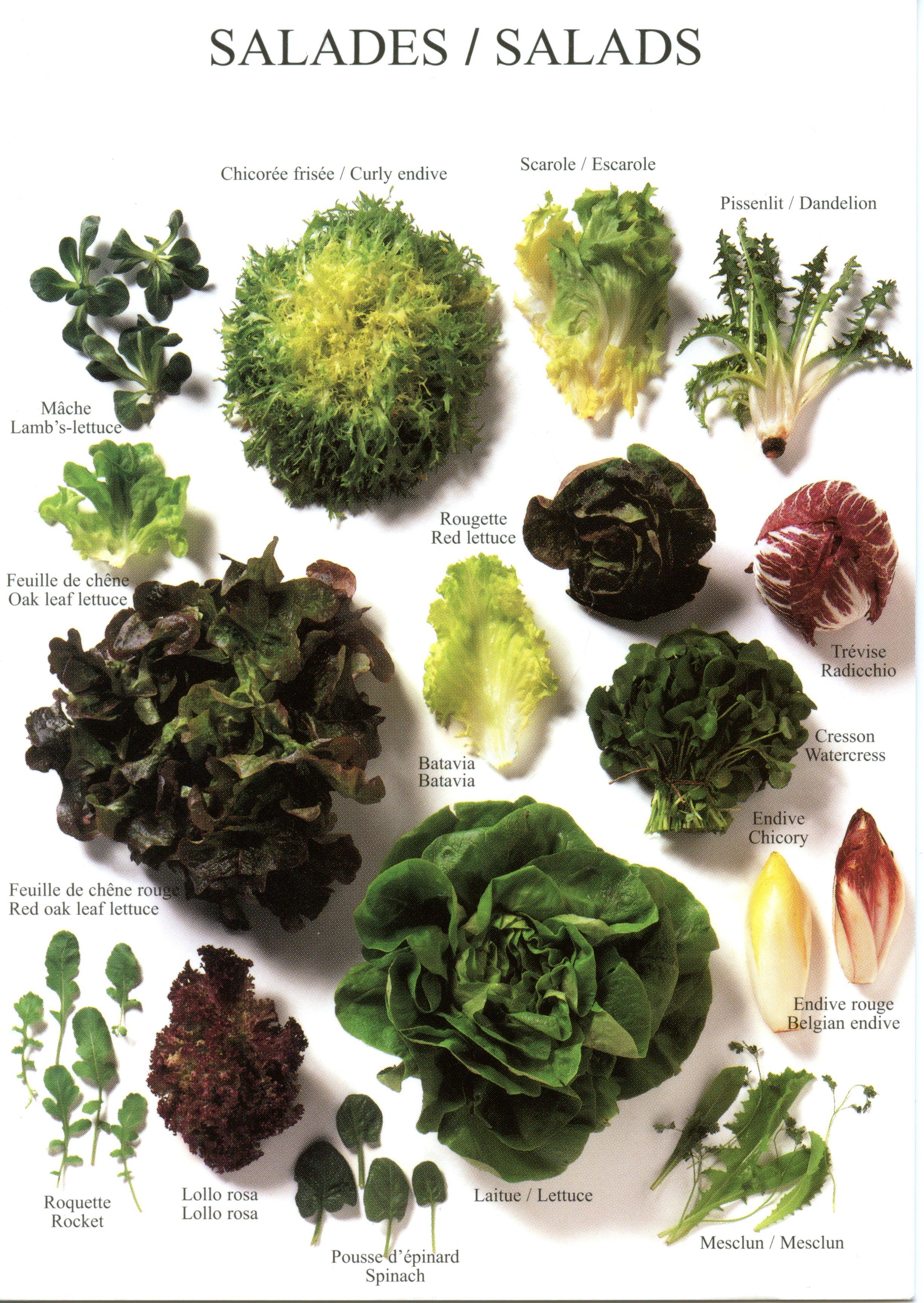 Trevor S Kitchen Recipes