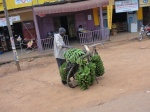 A 'matooke' (banana)seller in Masaka, the 10th largest city in Uganda, with his laden down bike.
