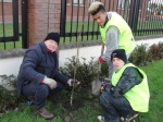 Planting cherry trees David and Andrew from Balbriggan Community College and the local 'Tidy Towns' volunteers.