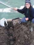 The lovely Áine Neville sowing 'Sharpe's Express' in her Curracloe polytunnel in sandy loam trenches on a bed of seaweed.