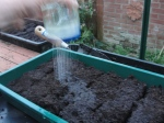 Watering a tray sown with tiny seed using a large jar of water with a perforated lid which drizzles water so seeds are not dislodged.
