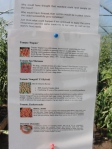 One of The Organic Centre displays describing some characteristics of different tomato varieties growing there.