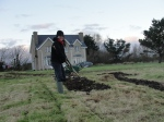 Áine and her sprong covering the no-dig beds furthest from the house with manure cardboard and more manure before topping with a black plastic cover.