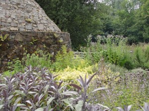 Thriving herb garden with purple sage to the fore beside a 'clochán' (monk's stone beehive hut) at the replica monastic site in The Heritage Park,  Wexford.