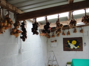 Red and white varieties of onion plaited and hung to ensure maximum air circulation. Pity the room is not dark.