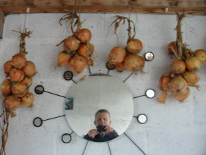 Capturing a picture of some onions plaited into hanks. Easy to store, easy to check and very easy to give away as gifts!