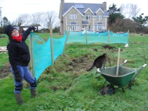 Áine taking a breather from hand weeding the rhubarb patch, while Stocaí Bána observes proceedings from the wheelbarrow.